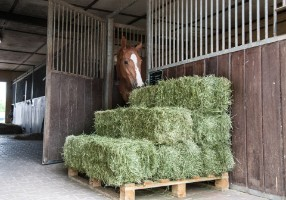 Dedusted hay for horses
